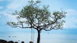 Capella Resort phu quoc 6