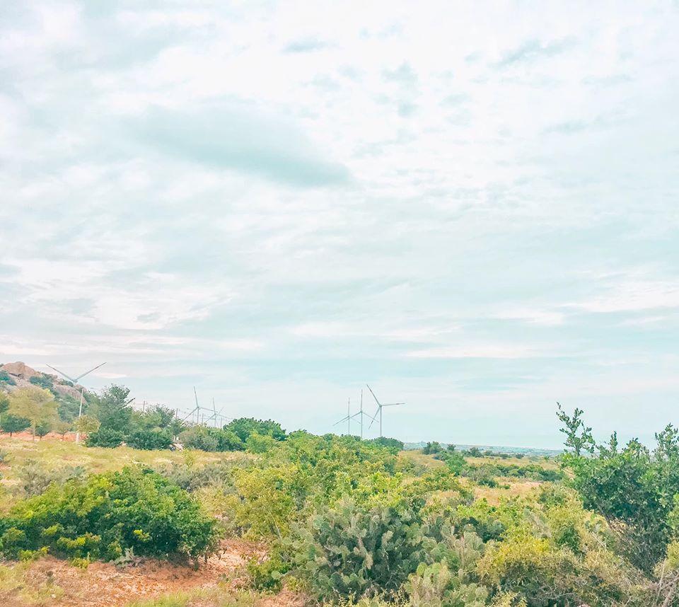 Cánh đồng quạt gió ngay trên đường đi Mũi Dinh nè