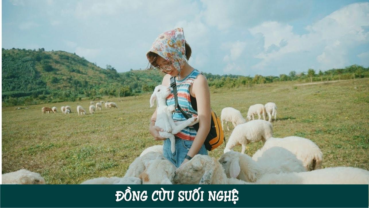 Đồng cừu Suối Nghệ cách Sài Gòn chỉ tầm 70 km nằm trên con đường Phước Tân – Hội Bài, đoạn ngang qua xã Suối Nghệ, huyện Châu Đức.