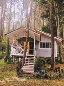 pine forest villa 1