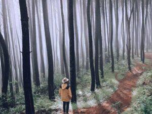 pine forest villa 2