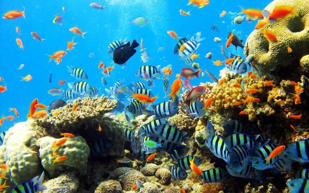 san ho Coral Garden